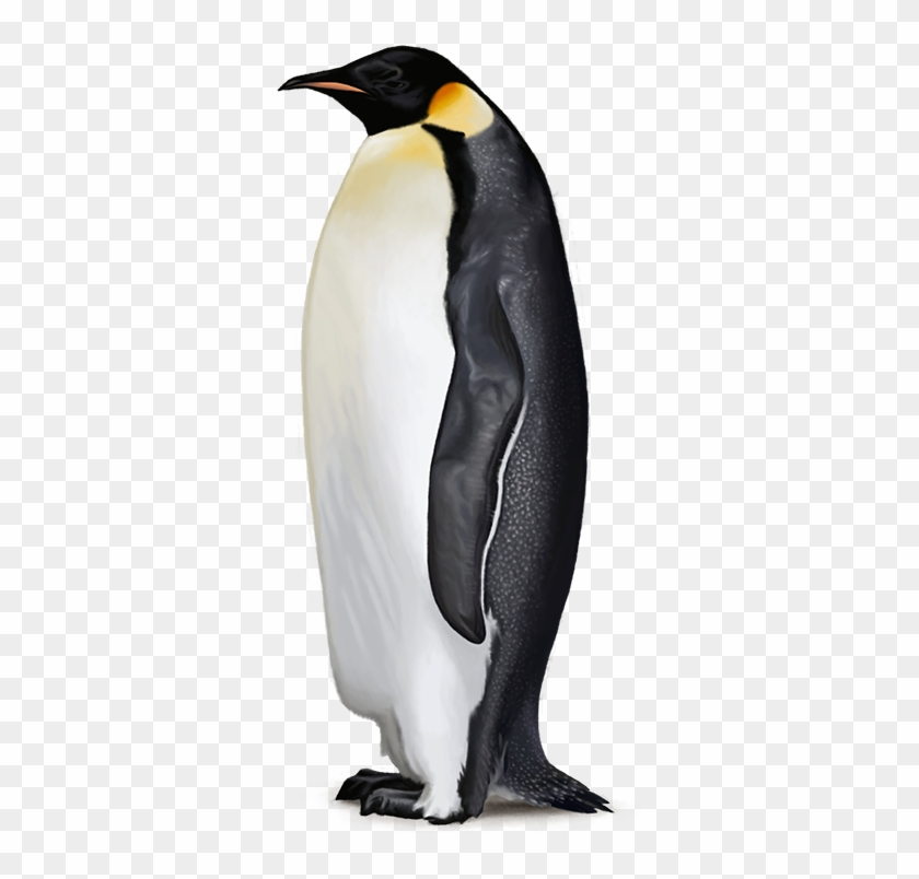 Penguin Free Png Image - Emperor Penguin Clear Background Clipart #524698