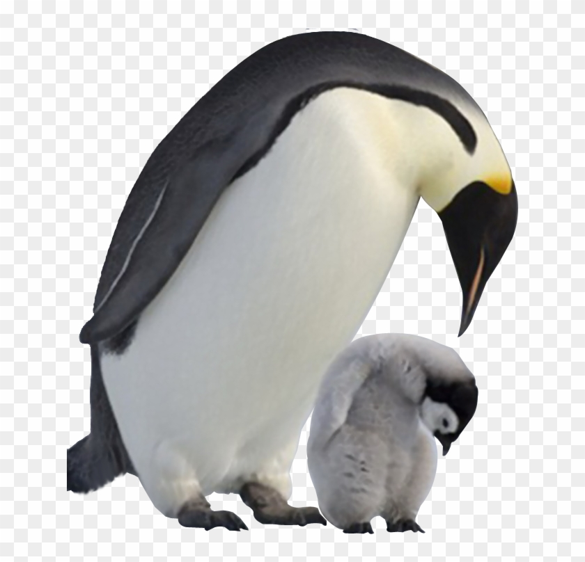 Penguin, Penguin: For The Earliest Reader Baby Penguins Clip Art, PNG,  967x1600px, Penguin, Animal, Artwork, Baby