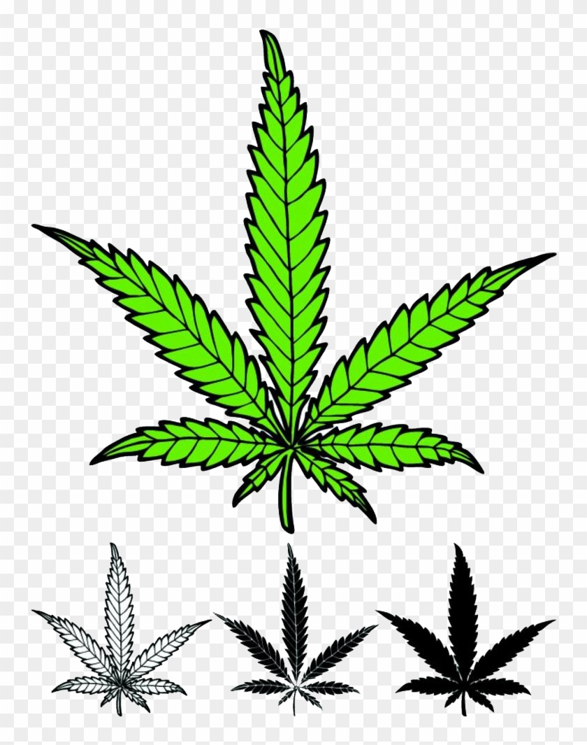 Drawings Of Weed Leaves Vector Hemp Leaf Clipart 527985 Pikpng