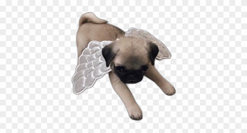 #puppy #dogs #dog #angel #pug #pugs #freetoedit - Companion Dog Clipart #5201858