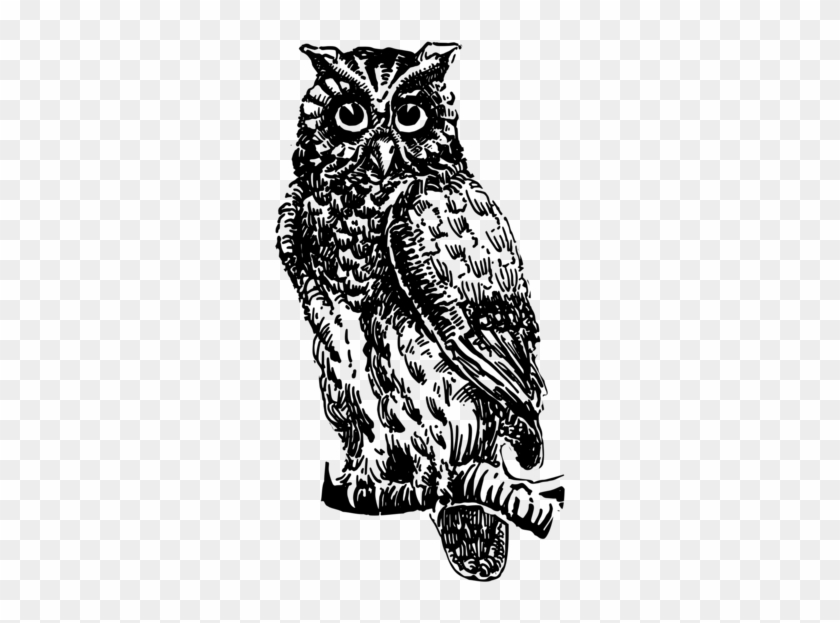 Great Horned Owl Bird Black And White Owl Animal Coruja No Galho