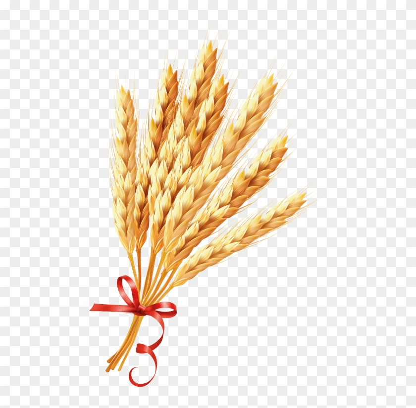 Download Wheat Png Images Background - Зерно Пнг Clipart #531226