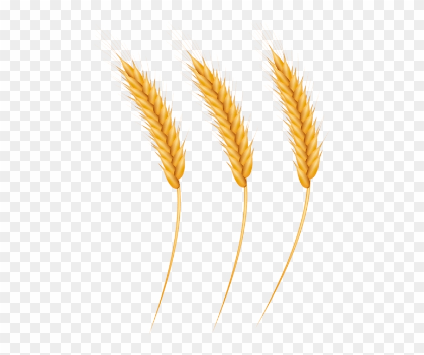 Free Png Download Wheat Grains Clipart Png Photo Png - Grain Clipart Png Transparent Png #531501