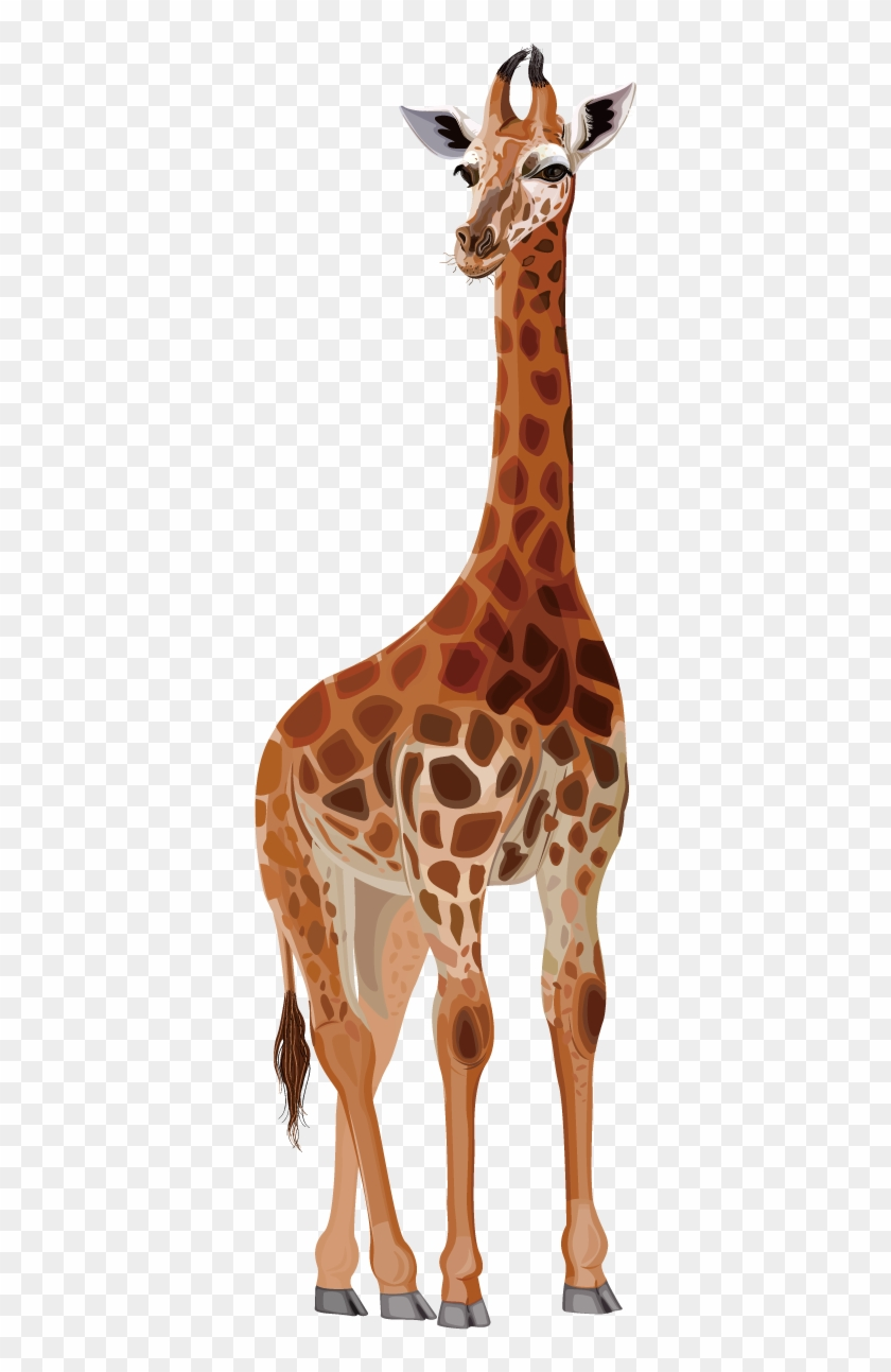 Collection Of Free Cartoons Download On Ubisafe - Northern Giraffe Drawing Clipart #532145