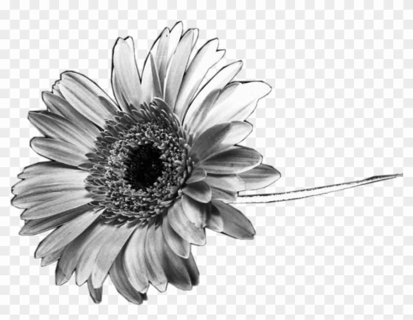 #black #white #sunflower #flower #interesting #nature - Iphone Telefon Duvar Kağıtları Tumblr Hd Clipart #5398883
