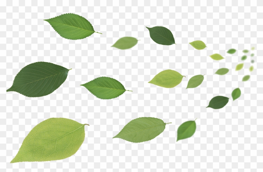 Free Leaf Cliparts, Download Free Clip Art, Free Clip Art on ... | 551x840