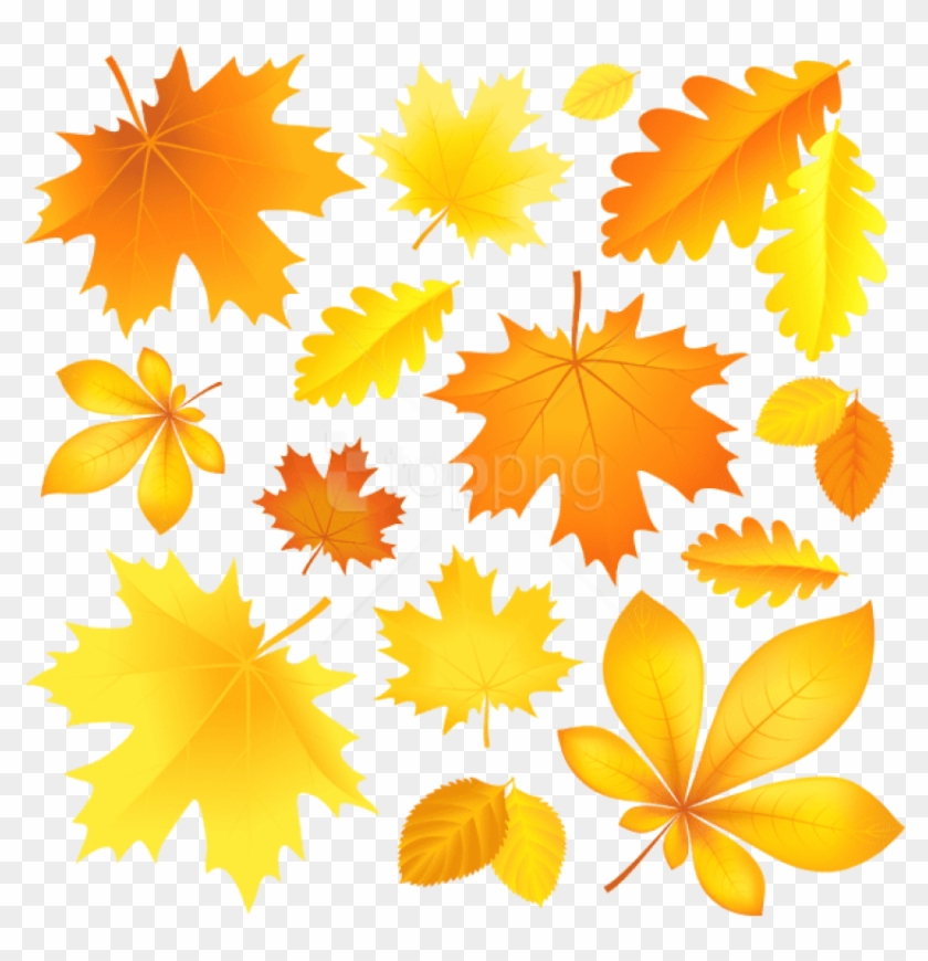 Download Transparent Fall Leaves Picture Clipart Png - Cartoon Image Of Autumn Leaves@pikpng.com