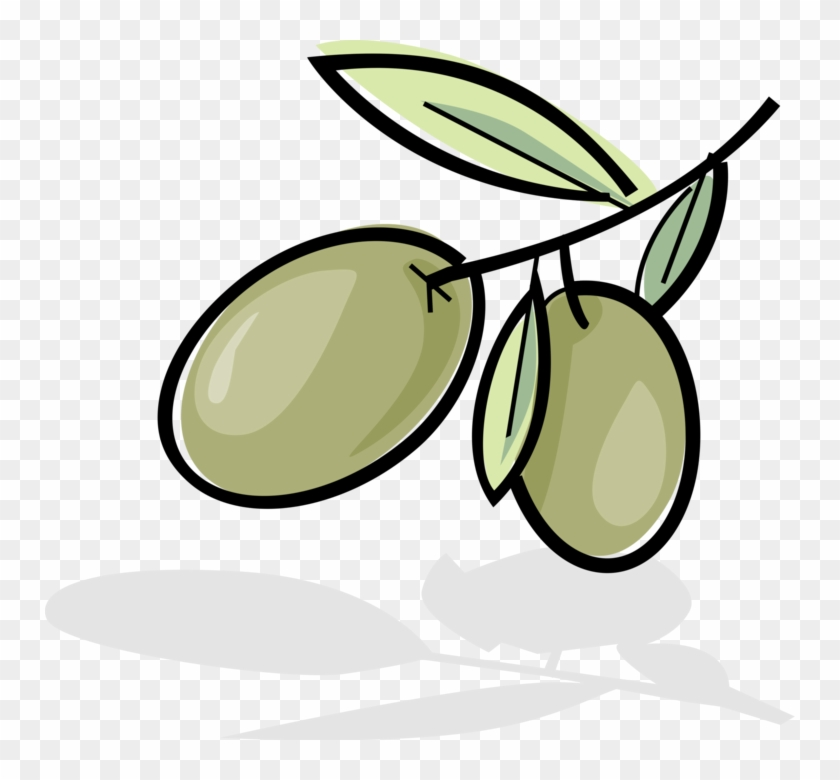 Vector Illustration Of Olives Growing On Plant Branch - Olive Clipart #5487769