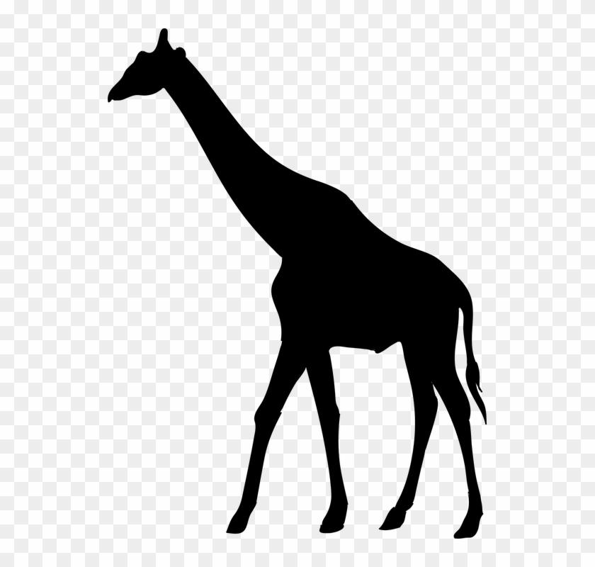 Giraffe Animal The Silhouette Safari Africa Animal Silhouettes Giraffe Clipart 5504644 Pikpng