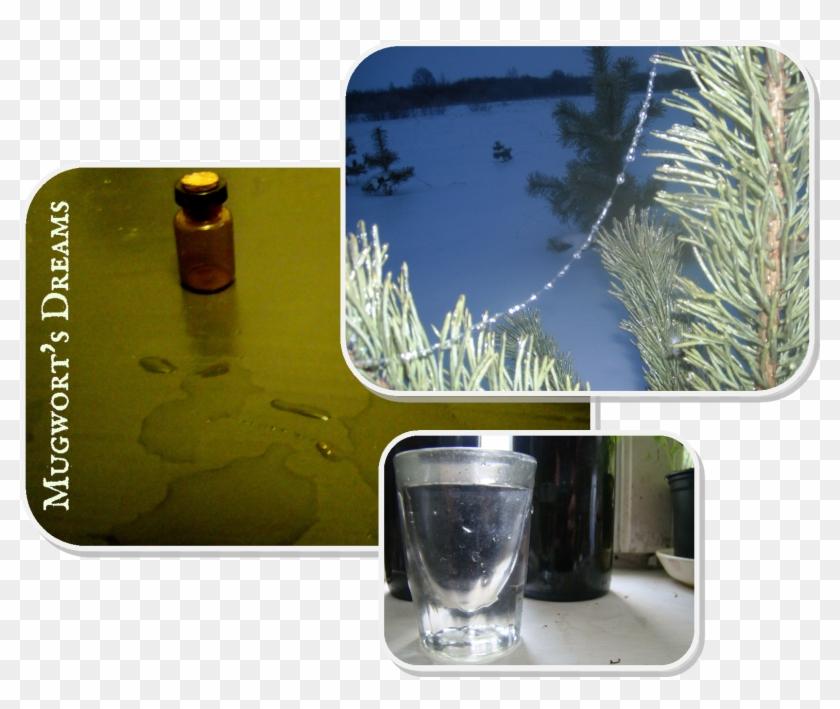 Herbal Tinctures Ii - Alcoholic Beverage Clipart #5519795