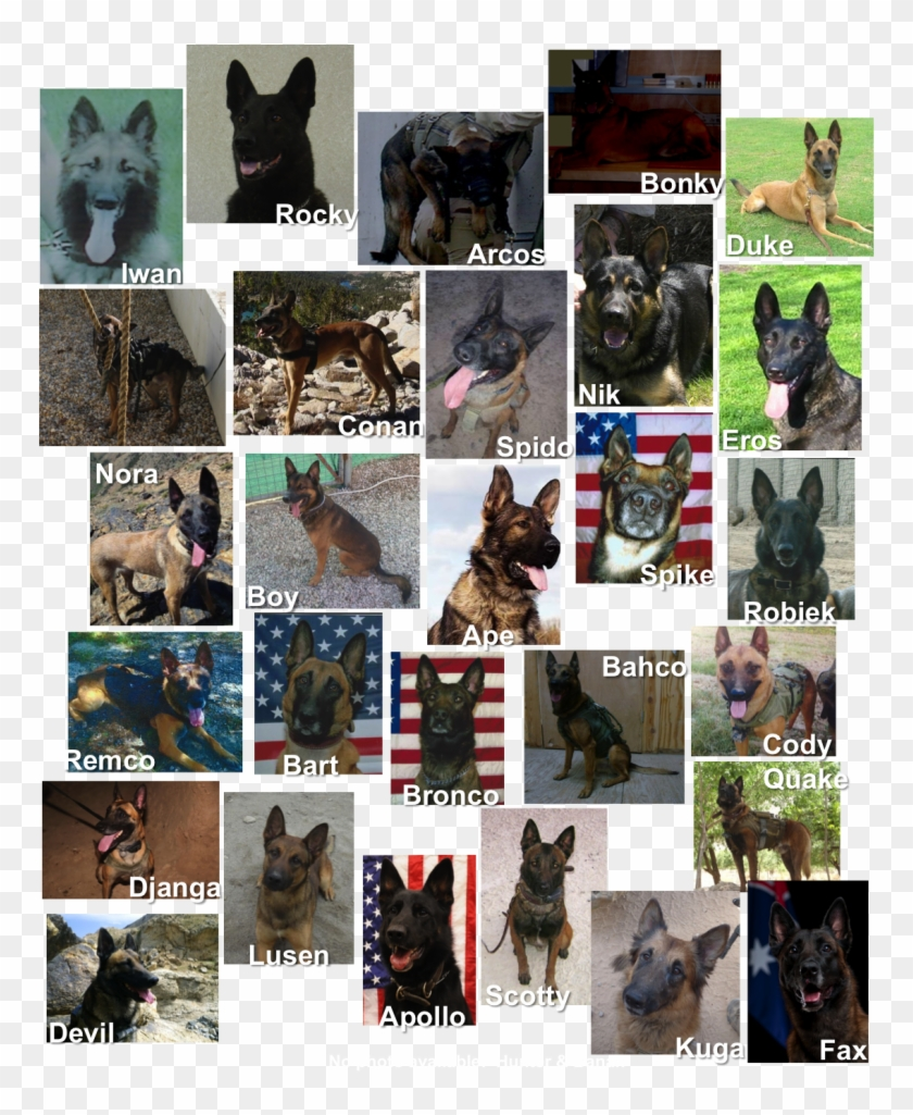 The Statue Is A Life Size Bronze Belgian Malinois, - Old German Shepherd Dog Clipart #5543478