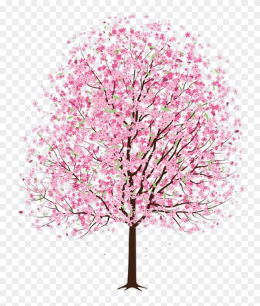 #tree #flower #flowers #pink #pinktree #pinkflower - Japanese Cherry Blossom Tree Drawing Clipart #5555350
