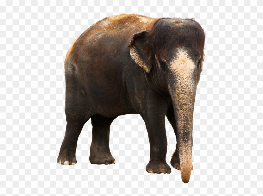 Kerala Elephant Png Clipart 568804 Pikpng Free elephant transparent png images. kerala elephant png clipart 568804