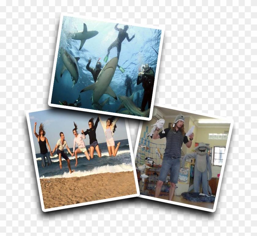 Shark Volunteer Program - Visual Arts Clipart #5617809