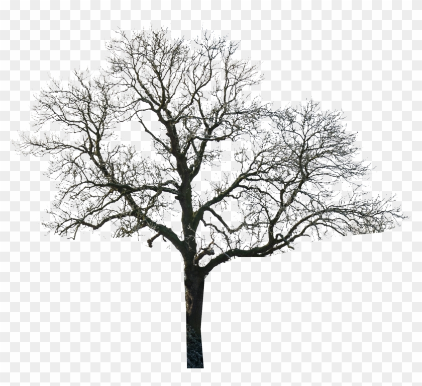 Tree - Tree Black And White Photoshop Clipart #5650124