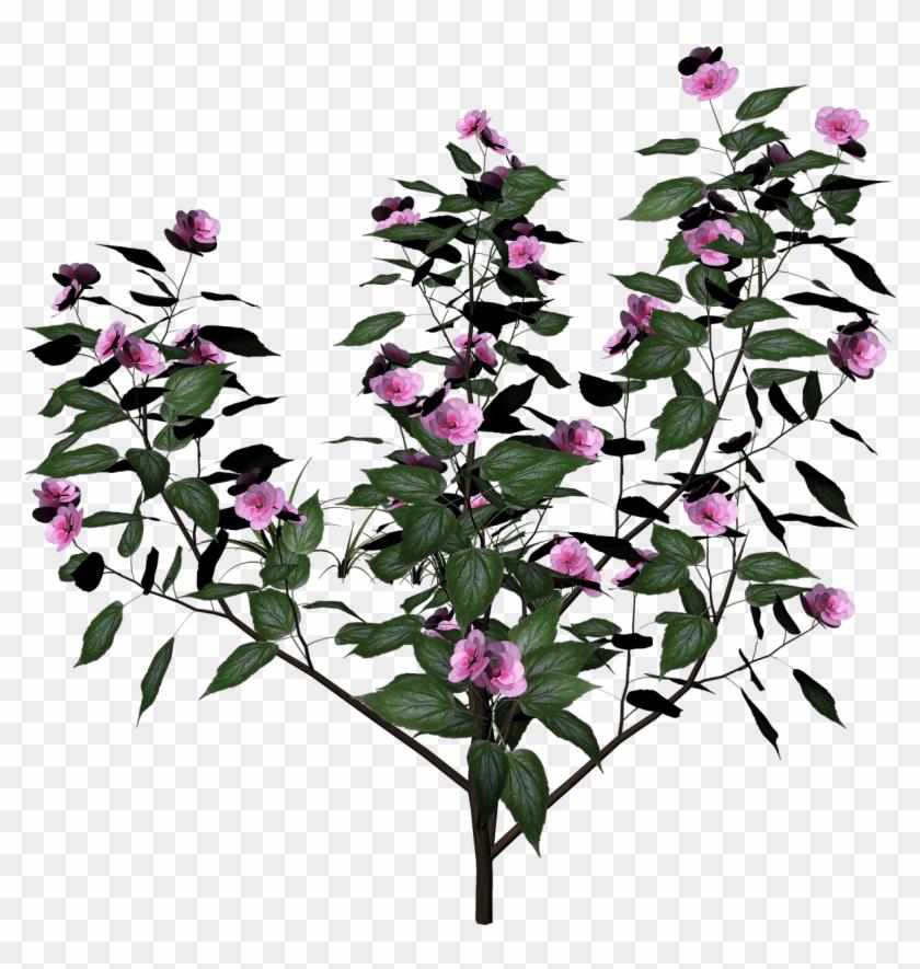 Bush Plant Flowers - Plant Render Clipart #572411
