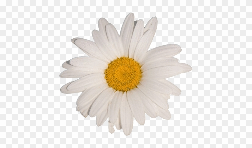 Flower White Tumblr Aesthetic Vaporwave White Flower Aesthetic Transparent Clipart 5783091 Pikpng