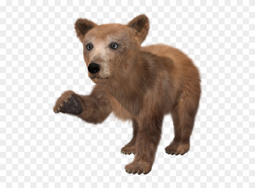 Bear Png High Quality Image Brown Bear Cub Png Clipart 589847 Pikpng Pin amazing png images that you like. brown bear cub png clipart