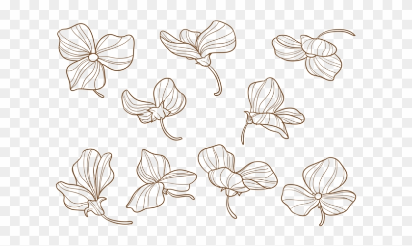 Flores Desenhadas À Mão De Ervilhas - Hand Drawn Sweet Pea Flower Clipart #5877812