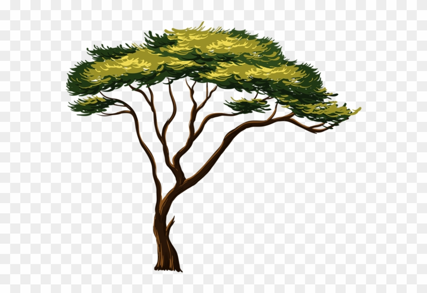 Painted African Tree Png Clipart Picture Trees Tree - African Tree Clipart Transparent Png #599911