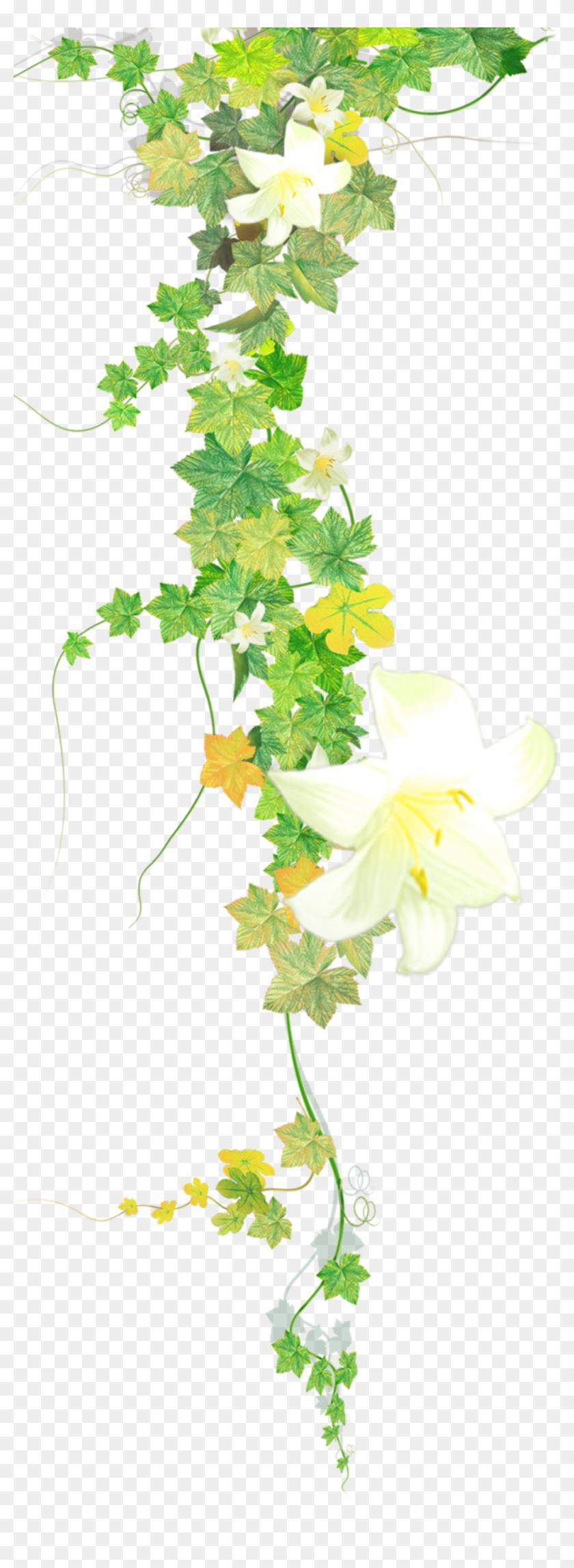 flower flowers vines leaves plants decoration , Lily