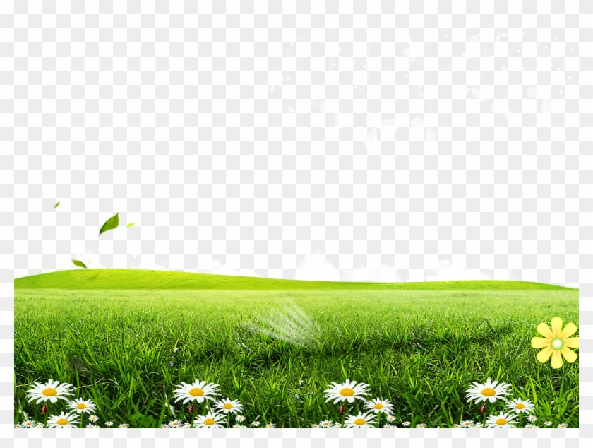 Green Lawn Poster Wallpaper Posters Flowers Transprent Green Grass Background Png Clipart 5998864 Pikpng