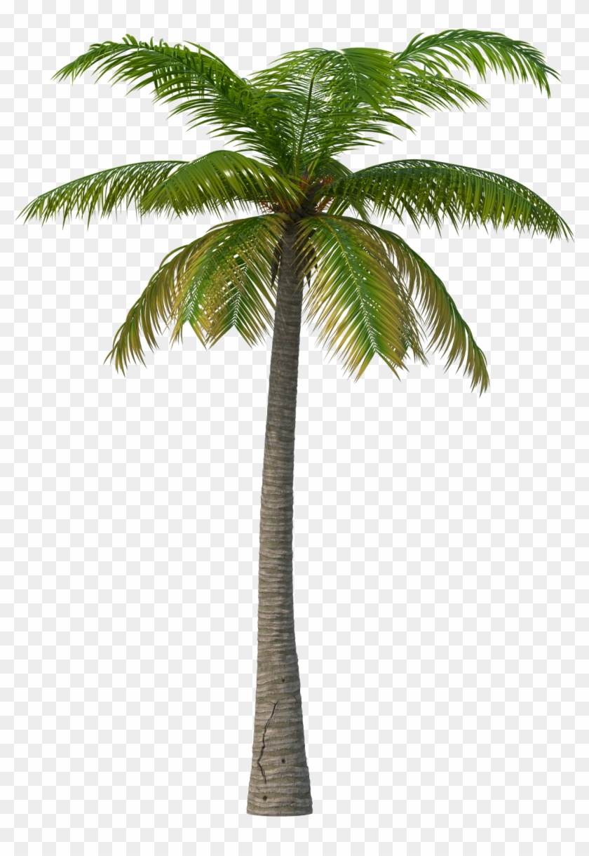 Palm Tree - Transparent Palm Tree Png Clipart #608397