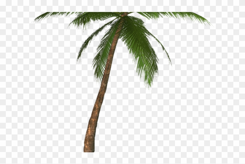 Palm Tree Png Transparent Images - Palm Tree Drawing Transparent Clipart #609161