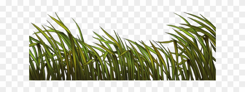 Reeds Png Clipart 6015752 Pikpng