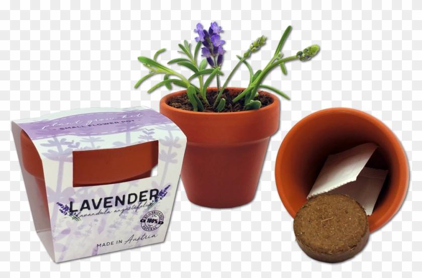 Customized Tiny Flower Pot - Tiny Plant Pot Clipart #620248