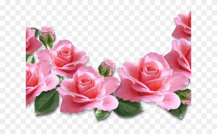 Rose Clipart Transparent Background Bunga Mawar Pink Png
