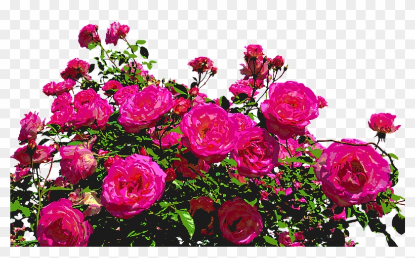 Roses, Nature, Drawing, Flower, Rose Blooms, Blossom - Flores Y Rosas Png Clipart #667312