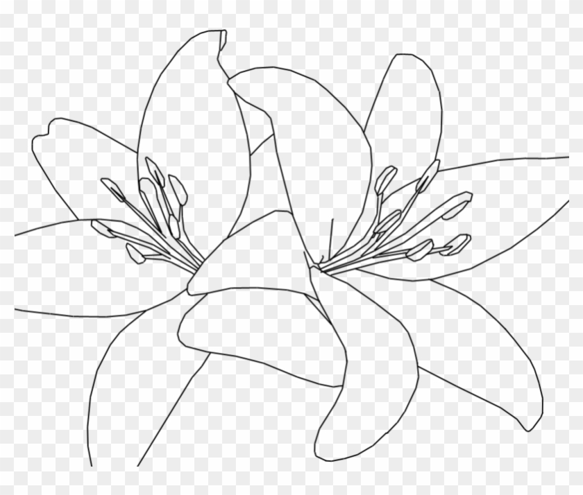 Jpg Black And White Download White Lilies Drawing At - Tiger Lily Line Drawing Clipart #667966