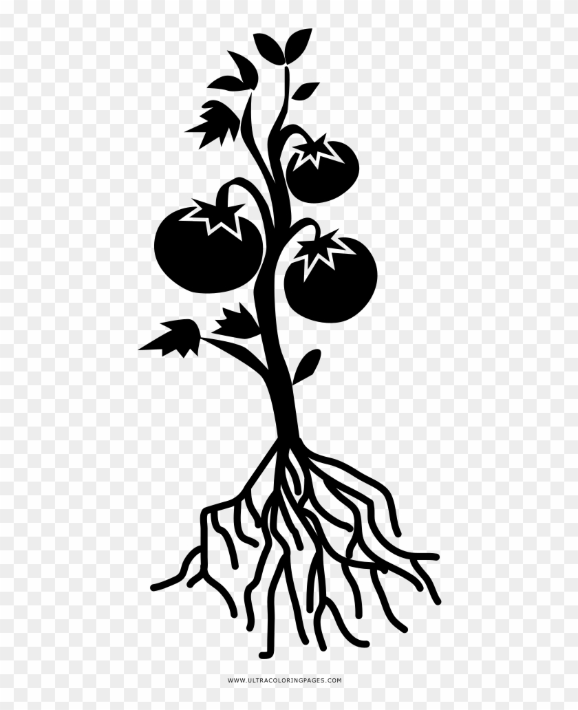 Tomato Plant Coloring Page - Black And White Tomato Plant Clipart@pikpng.com