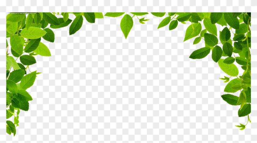 1920 X 1024 12 - Leaves Border Clipart Png Transparent Png #696247
