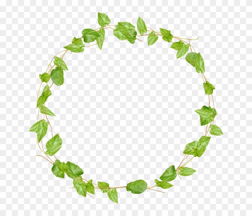 Vine Border, Vines, Photoshop, Frames, Charts, Green, - Cherries Ftu Cluster Png Clipart