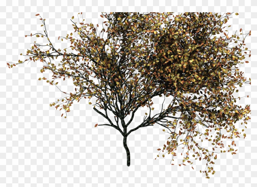 This Is Not Going To Be Useful For The Tree Modeling - Photoshop Autumn Tree Png Clipart #708637