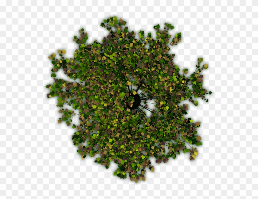 The First One Is Crap, Because Of The Hard Shadows - Tree From The Top Photoshop Clipart #749773