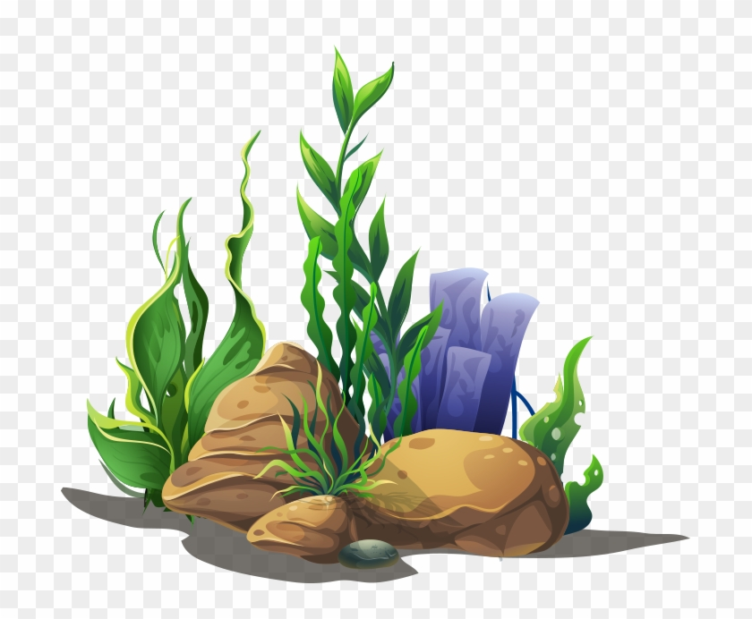 If Your Child Needs A Dental Crown In Orem, Utah, We - Aquatic Plant Clipart #766013