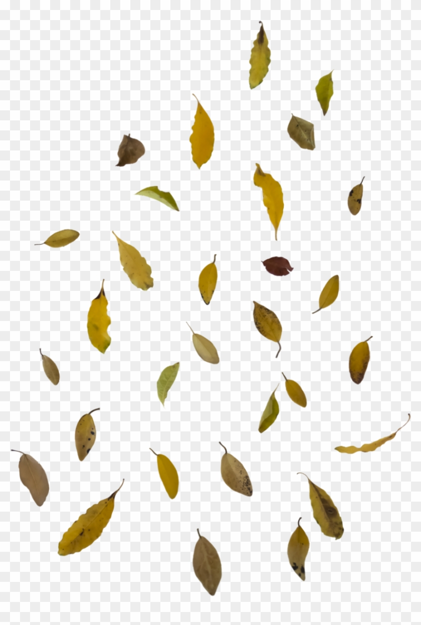 Falling Autumn Leaves Free Png Image - Falling Leaves Png Clipart #84977