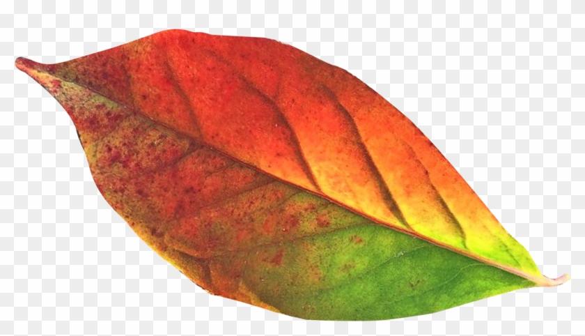 Transparent Fall Leaf Png Clipart #85016