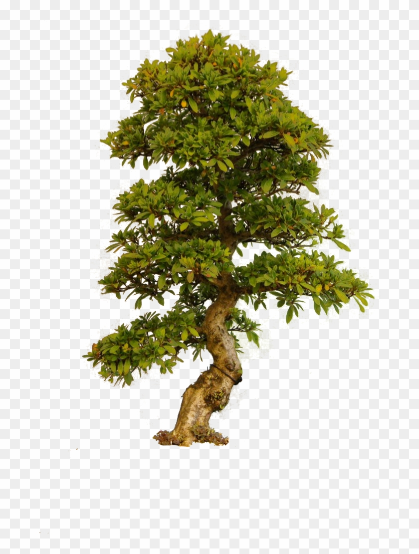 Tree Of Life - Old Tree Png Clipart #86483