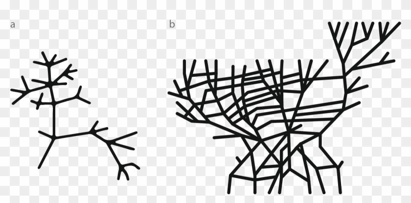 Darwin's First Sketch Of The Tree Of Life, 1837 B - Arbol De La Vida Darwin Clipart #86569