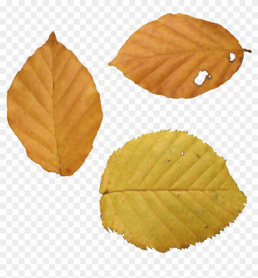 Dead Leaves Png - Yellow Leaves In Autumn Png Clipart #86806