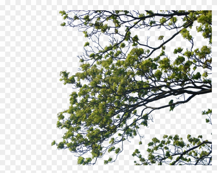 Tree Branch Png Clipart - Tree Branches For Photoshop Transparent Png #87705