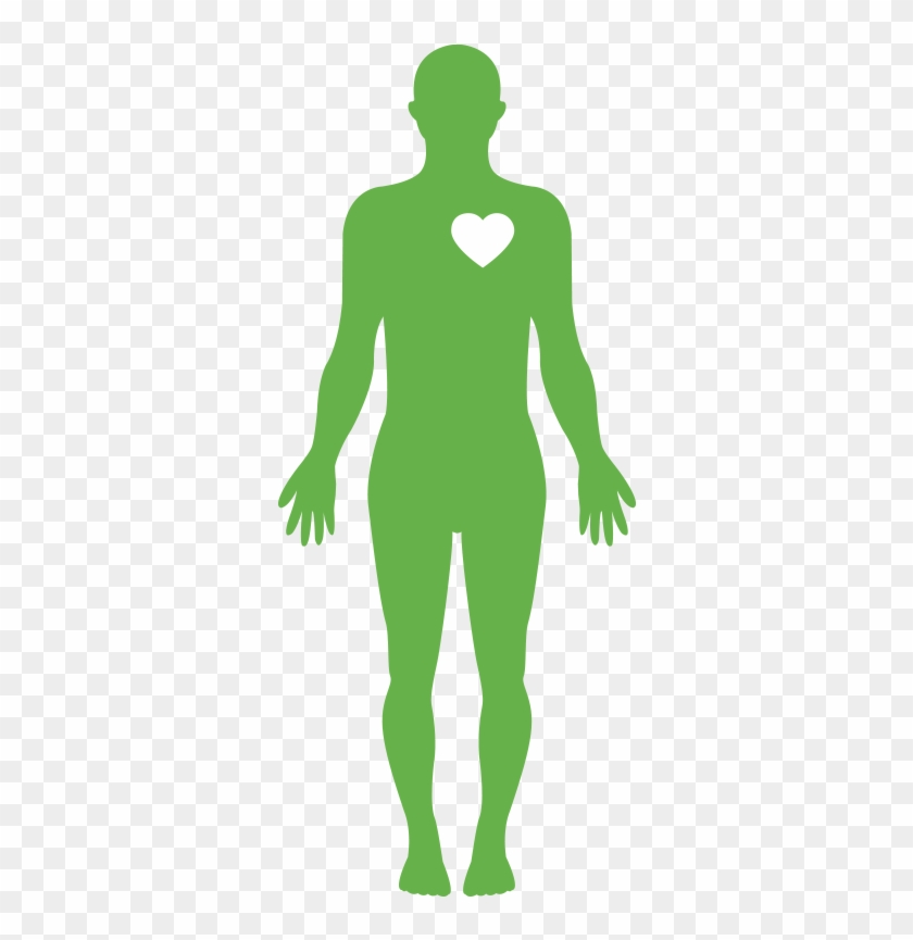 Body Human Body Water Png Clipart 819134 Pikpng