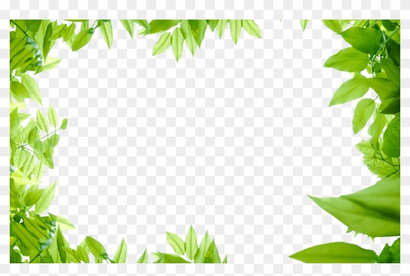 Collection Of Free Leaf Transparent Border Download - Transparent Green Leaves Png Clipart #863529
