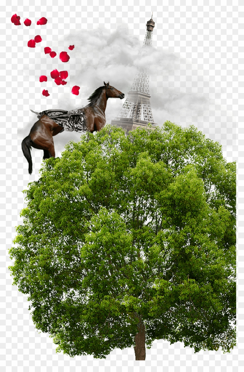 Tree For Photoshop Png Clipart #899573