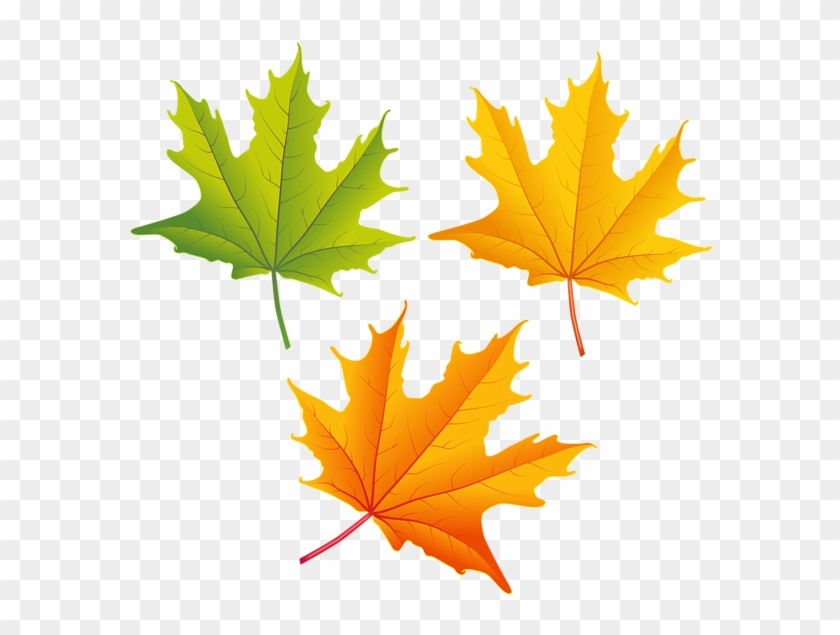 Falling Autumn Leaves Png High-quality Image - Autumn Leaves Clipart Png Transparent Png #91507