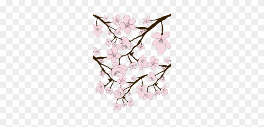 Drawn Cherry Blossom Transparent - Illustration Clipart